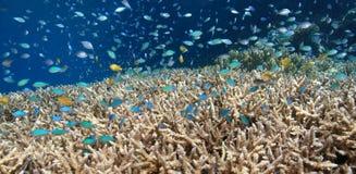 коралловый риф отмелый стоковые фото