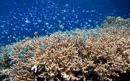 коралловый риф отмелый стоковое изображение rf