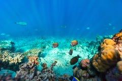 коралловый риф подводный Стоковое фото RF