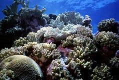 коралловый риф Стоковые Изображения