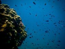 коралловый риф Стоковые Фото