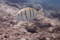 коралловый риф 2840 Стоковое Фото