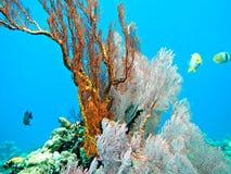 Коралловый риф. Стоковые Фото