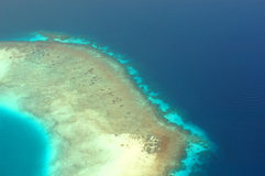 коралловый риф Стоковая Фотография