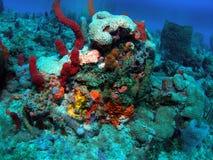 коралловый риф Стоковое Фото