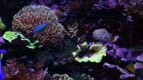 Кораллы для исследования сток-видео