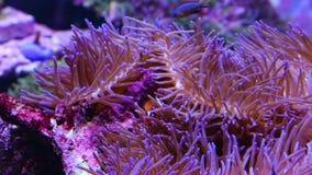 Кораллы для исследования акции видеоматериалы