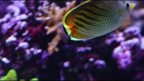 Кораллы для исследования видеоматериал
