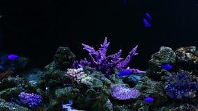 Кораллы и экзотические морские рыбы акции видеоматериалы