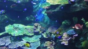 Кораллы и экзотические морские рыбы сток-видео