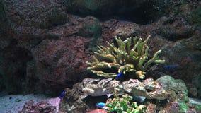 Кораллы моря на морском дне и плавать около красочных тропических рыб акции видеоматериалы