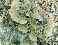 Кораллы рифа в Тихий Океан Стоковое фото RF