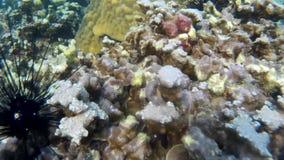 Кораллы Таиланда акции видеоматериалы