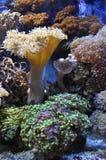 Кораллы стоковое фото