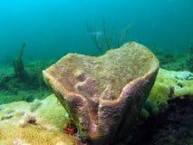 коралл бочонка Стоковая Фотография