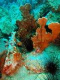 коралл каменистый Стоковое Фото