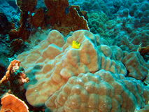 коралл каменистый Стоковое фото RF
