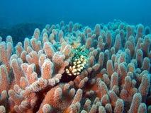 коралл мягкий Стоковые Фото