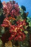 коралл мягкий Стоковое Изображение