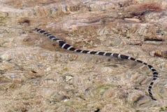 коралл над заплыванием змейки моря рифа Стоковое Фото