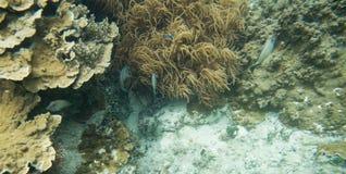 Коралл пальца кожаные и рыбы рифа Стоковое Изображение
