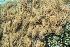 Коралл пальца кожаный в движении Стоковые Фотографии RF