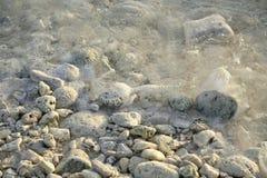 коралл пляжа близкий вверх стоковое изображение rf