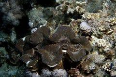 коралл тропический Стоковая Фотография