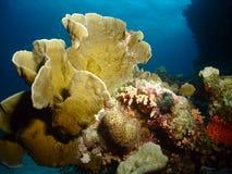 коралл трудный Стоковая Фотография RF