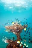 коралл удит богачей Стоковое Фото