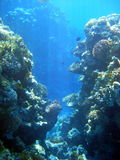 коралл 2 Стоковое Изображение RF