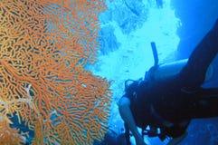 коралл стоковые изображения rf