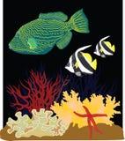 коралл стоковые фото