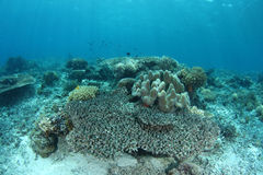 коралл bleaching Стоковая Фотография