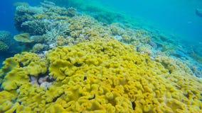 коралл близкий вверх в рифах Австралии agincourt Стоковые Изображения