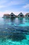 Коралл в Мальдивах Стоковое Изображение