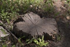 Кора дерева в природе Стоковые Фото