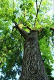 Кора дерева и листья золы стоковое изображение rf