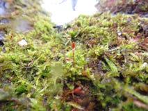 Кора дерева с бутоном и дождевыми каплями Стоковое фото RF