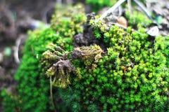 Кора дерева с мхом в дождевом лесе Стоковое Изображение RF
