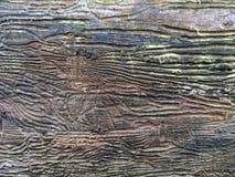 Кора дерева с следами жука расшивы Стоковое фото RF