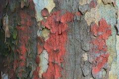 Кора дерева Grunge с оранжевой краской стоковое фото