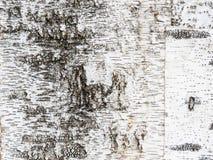 Кора дерева березы Стоковые Фотографии RF
