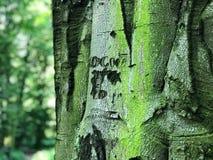 Кора дерева в лесе в юго-западной Польше Стоковая Фотография RF