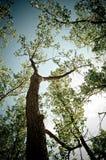 Кора дерева и голубое небо Стоковые Изображения RF