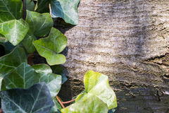 Кора дерева и зеленые листья Стоковая Фотография RF