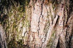 кора дерева, поверхность, предпосылка Стоковые Фотографии RF