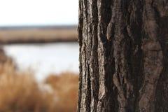 Кора дерева против ландшафта озера Стоковое Изображение
