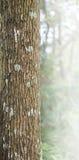Кора дерева с мхом и лишайниками - текстура и предпосылка Стоковые Изображения RF