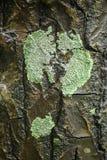 Кора дерева с мхом Стоковая Фотография RF